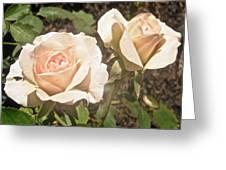 Creamy Roses Greeting Card