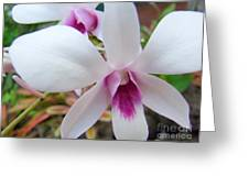 Creamy White And Hot Pink Orchid Greeting Card