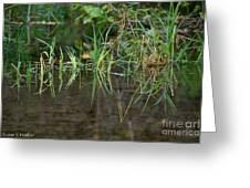 Creek Grass Greeting Card