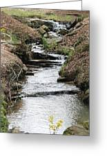 Creek In Alabama Greeting Card