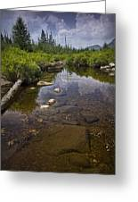 Creek In Vermont Greeting Card