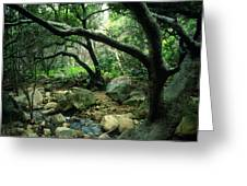 Creek In Woods Greeting Card by Kathy Yates