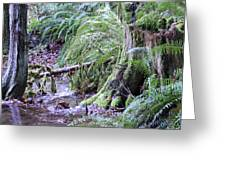 Creek Running Through The Forest Greeting Card