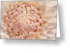 Creme Dahlia Greeting Card