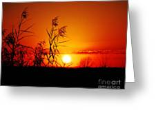 Creole Trail Sunset Greeting Card
