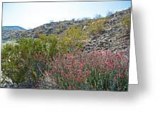 Creosote And Chuparosa On Henderson Trail In Santa Rosa-san Jacinto Nmon-ca Greeting Card