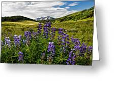 Crested Butte Lupines Greeting Card