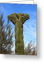 Crested Cactus Greeting Card
