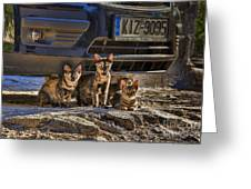 Cretan Cats-1 Greeting Card