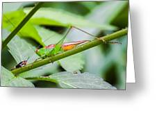 Cricket Meets Grasshopper Greeting Card