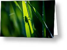 Cricket Silhouette Greeting Card