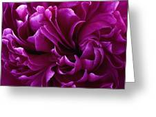 Crimson Chiffon Greeting Card