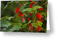 Crimson Flowers Greeting Card