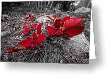 Crimson Foliage Greeting Card