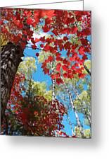 Crimson Foliage Greeting Card