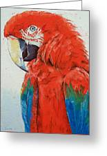 Crimson Macaw Greeting Card