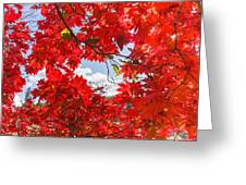 Crimson Red Leaves Background Greeting Card
