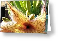 Crimson Starfish Flying Plant Bloom Greeting Card