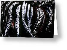 Crinoids 4 Greeting Card