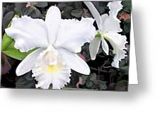 Crisp White Orchids In A Shady Garden Greeting Card