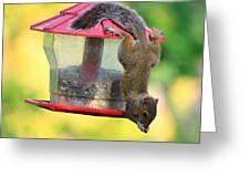 Critter Acrobat Greeting Card