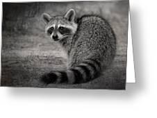 Critter Corner Greeting Card