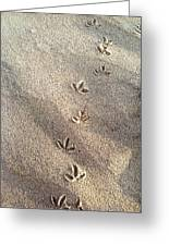 Critter Tracks In The Sand Greeting Card