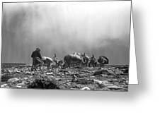 Donkey Train On Croagh Patrick Greeting Card