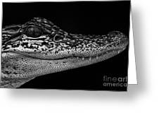 Crock's Look Black And White Greeting Card