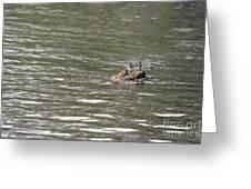 Crocodile   #0579 Greeting Card