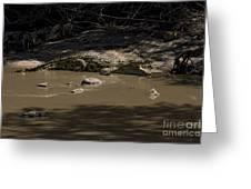 Crocodile   #7282 Greeting Card
