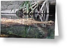 Crocodile Eyes Greeting Card