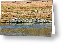 Crocodile In Watering Hole In Kruger National Park-south Africa Greeting Card