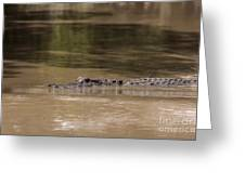 Crocodile Greeting Card by Rostislav Bychkov