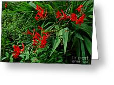 Crocosmia In Red Greeting Card