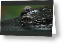 Croc's Eye-1 Greeting Card