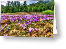 Crocus Flower Valley Greeting Card