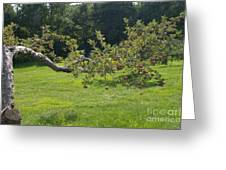 Crooked Apple Tree Greeting Card