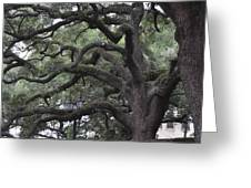 Crooked Branches Greeting Card