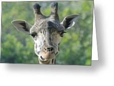 Crooked Grin Greeting Card