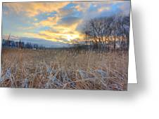 Crooked Lake Willows Greeting Card by Jenny Ellen Photography