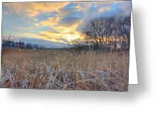 Crooked Lake Willows Greeting Card