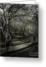 Crooked Tree Enchanted Path Greeting Card