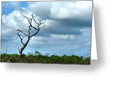 Crooked Tree On Crooked Island Greeting Card by Julie Dant