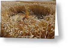 Crop Circle At Bishops Canning Greeting Card