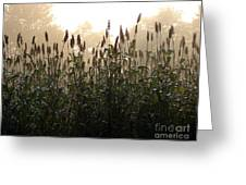 Crops In Fog Greeting Card by Olivier Le Queinec
