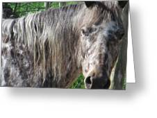 Cross Breed Horse Greeting Card