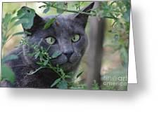 Cross Eyed Cat Greeting Card