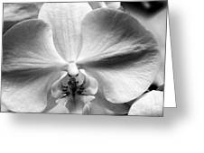 Cross Orchid Greeting Card