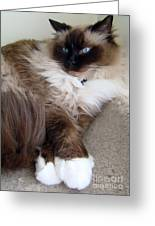 Crossed Paws Greeting Card
